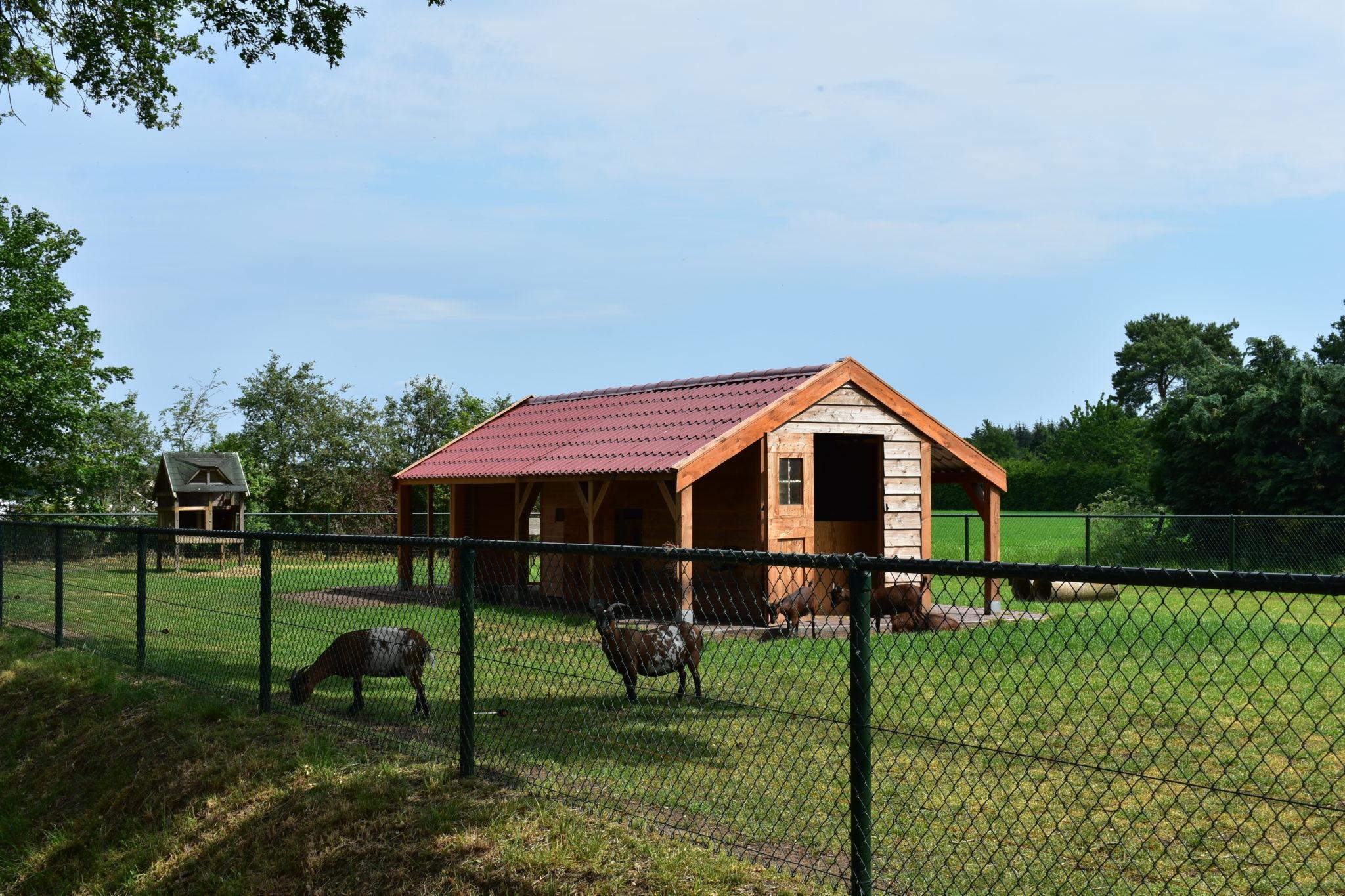 camping harminahoeve kinderboerderij